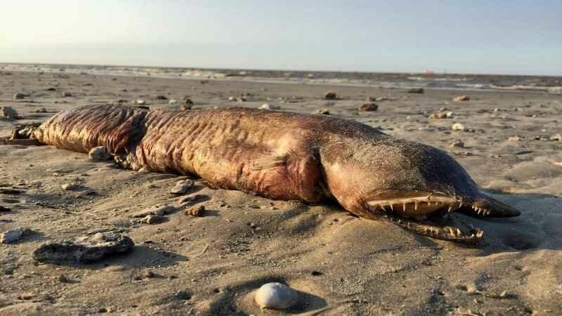 Морское чудовище вынес ураган Харви на пляж Техас-Сити