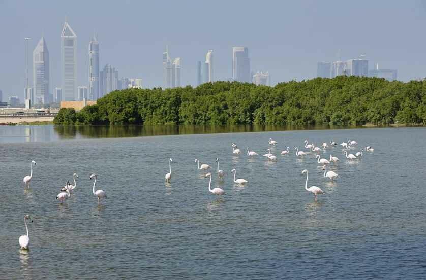 Места отдыха в Дубай ведут в природные заповедники