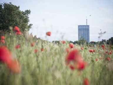 Экскурсии в Белграде на русском