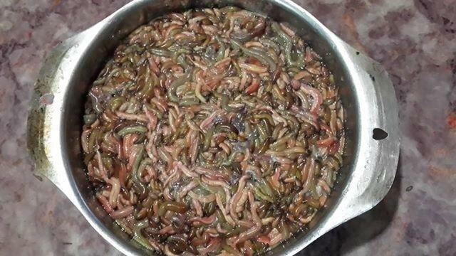 Ужасные вьетнамские блюда