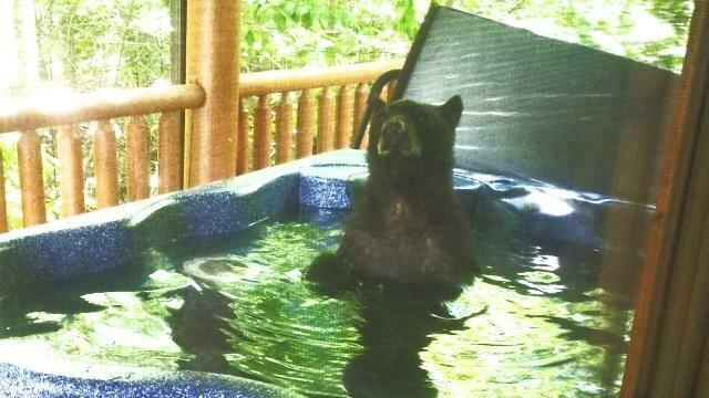 Медведь искупался в джакузи
