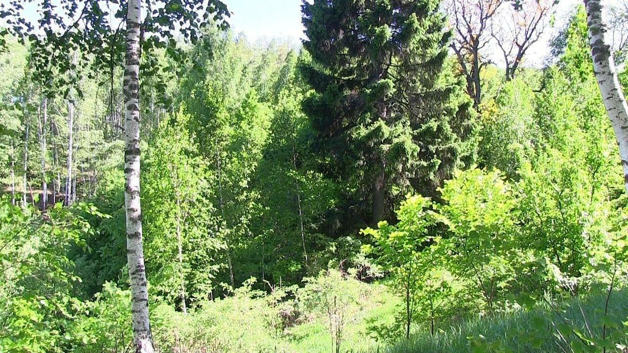 Отдых в лесу – лучший способ снять стресс беспокойной жизни