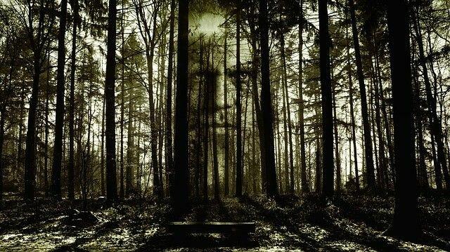 Призраки леса Хойя Бачу